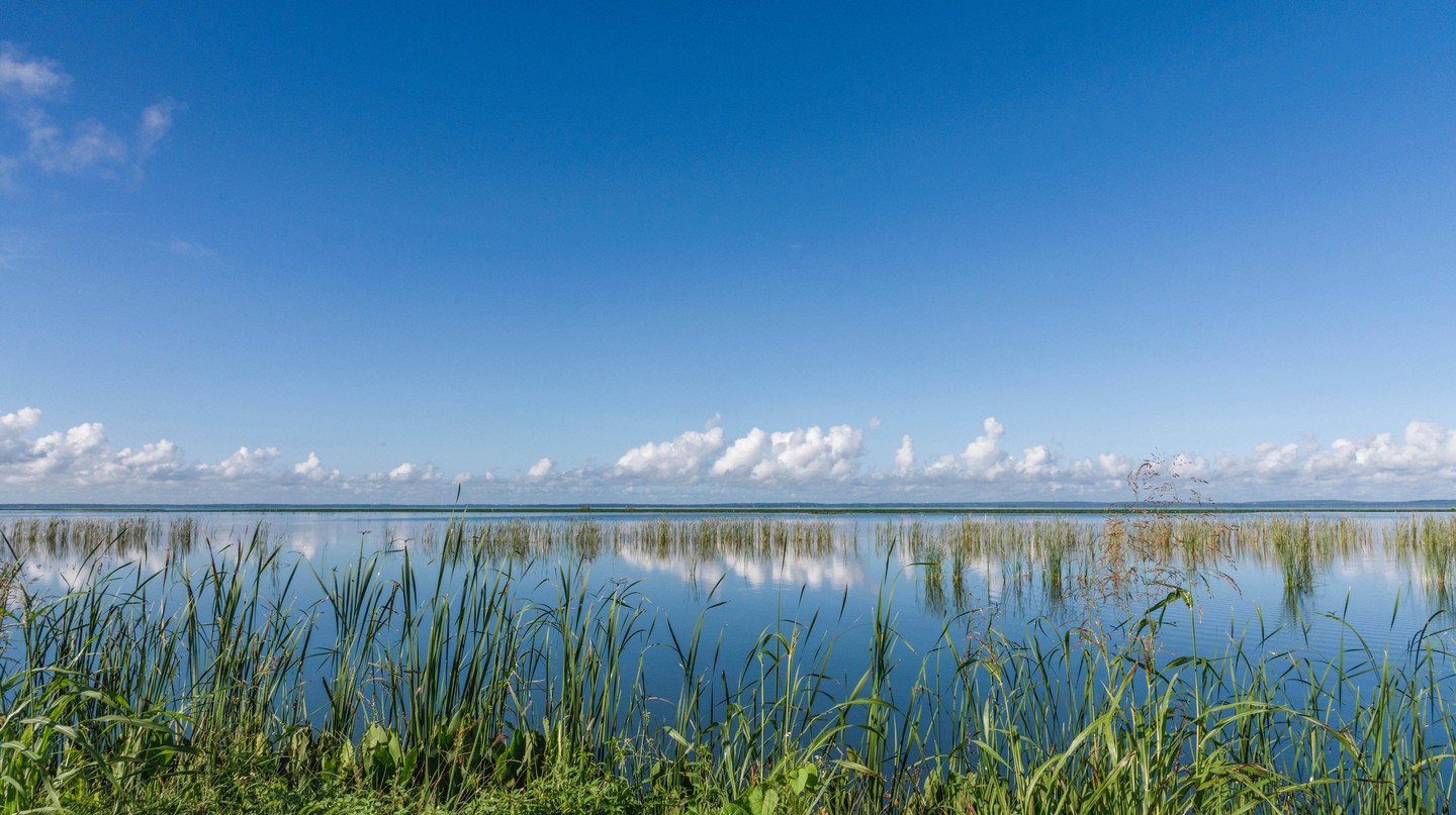 Take in Florida's diverse flora and fauna on the best cycling routes in and around Orlando
