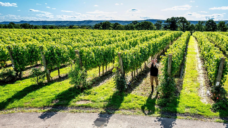 Sussex Vineyards You Should Visit