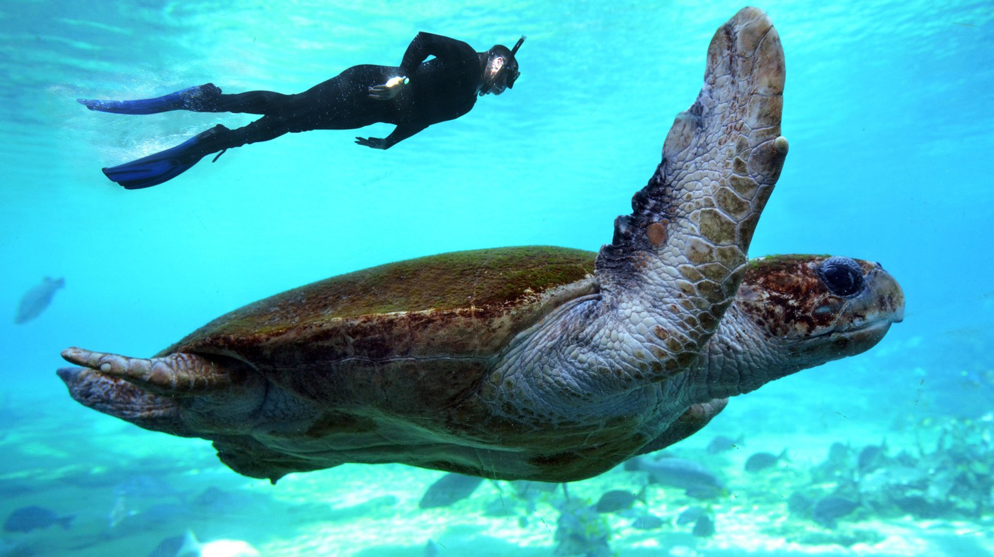Byron Bay offers a wonderful underwater world of marine species to discover