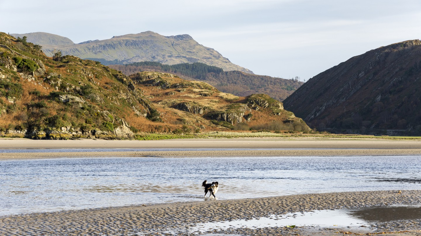 Dogs are welcome in Snowdonia National Park, but beware of fields with livestock in