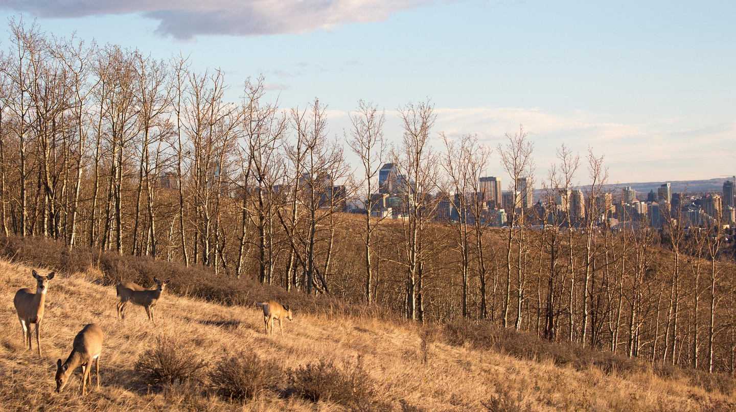 Calgary's parks and green spaces offer an urban connection to nature