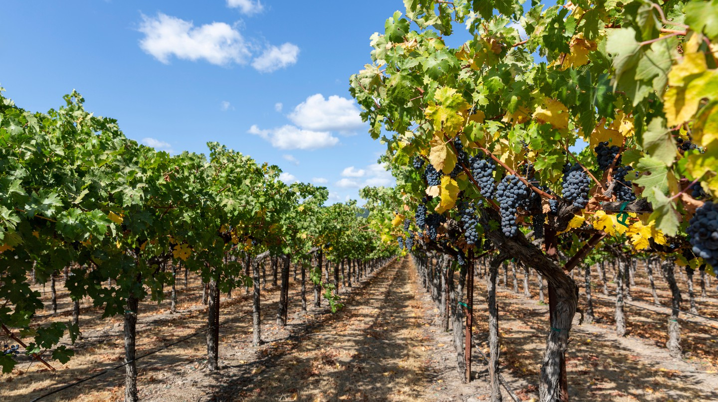 Sonoma County is home to more than 100 wineries