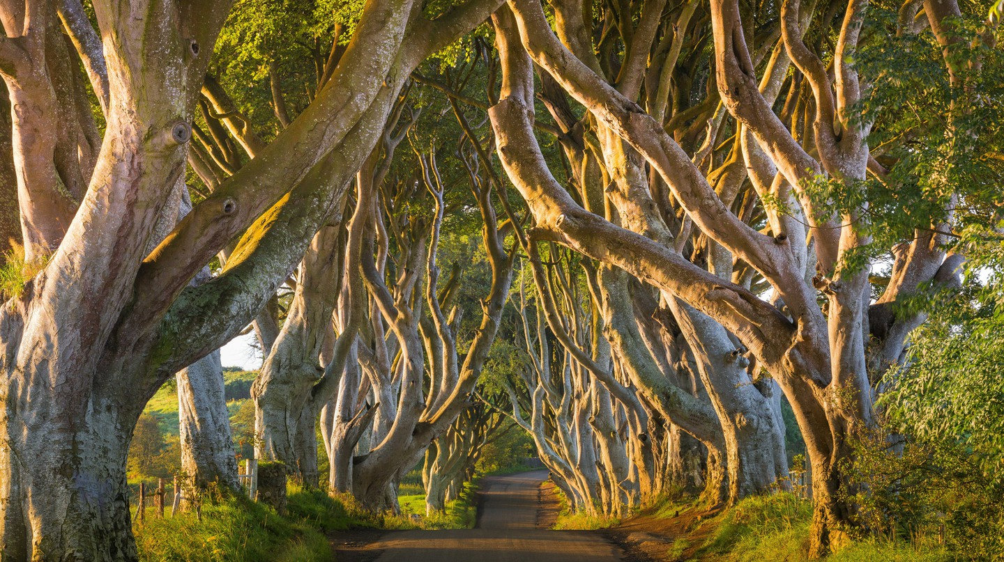 The top places to see in Northern Ireland include the stunning Dark Hedges