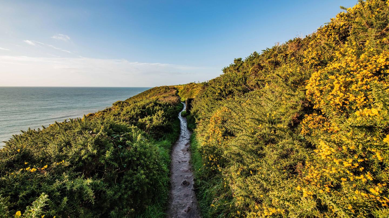 The Ballycotton Cliff Walk hike in Cork