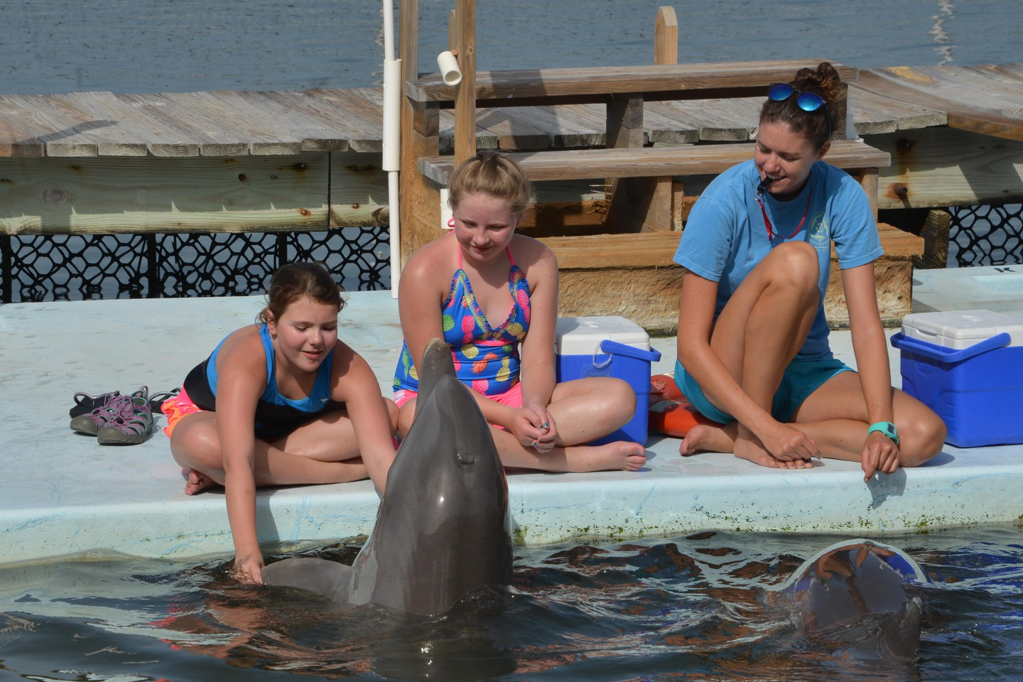 Participants in the dolphin trainer program at the Dolphin Research Center in Grassy Key Florida USA