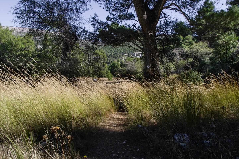 مسار المشي ملحوظ على جبل بارنيثا