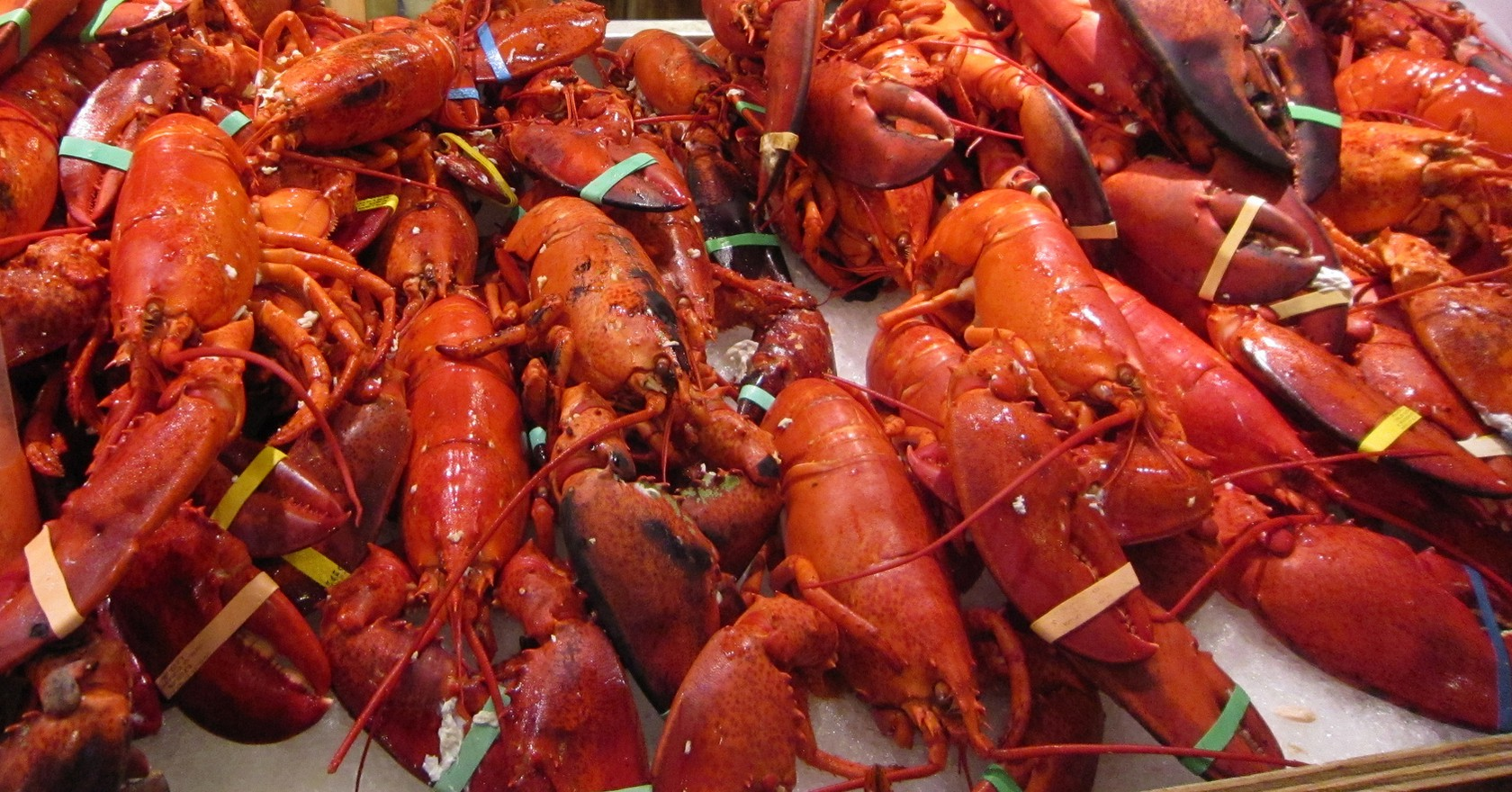 the 10 best lobster restaurants in maine