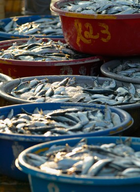 Fish for sale in the market in Hoi An