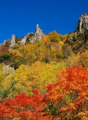 Autumn Leaves in Hokkaido, Japan.