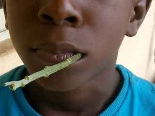 Boy chewing the twig of the Bitter Leaf Bush
