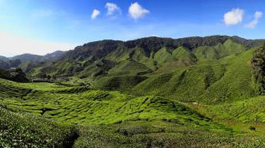 Cameron Highlands Tea Plantation © Bjørn Christian Tørrissen/WikiCommons