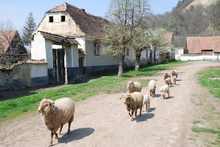 Village Life Romania
