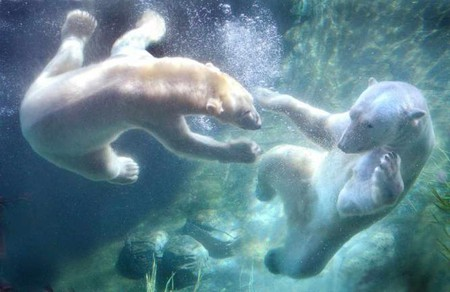 San Diego Zoo | © Rene Rivers/Flickr