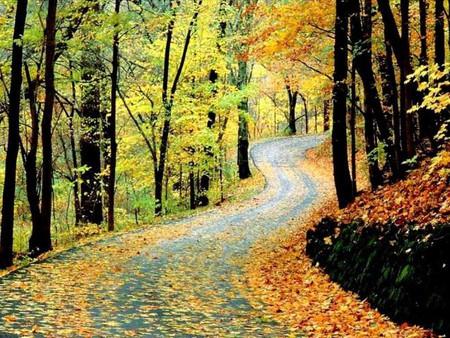 Autumn woods in Warner Parks