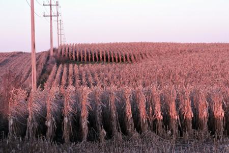 Corn Field, Cedar Rapids, Iowa   ©Alan Kotok/Flickr