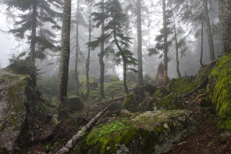 The forest at the top of the Lake Serene trail near Index, WA |© NullSynapse/Flickr