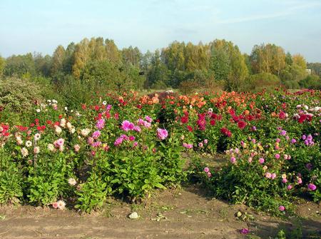 Vilnius University Botanical Gardens  | ©Algirdas/Wikimedia Commons