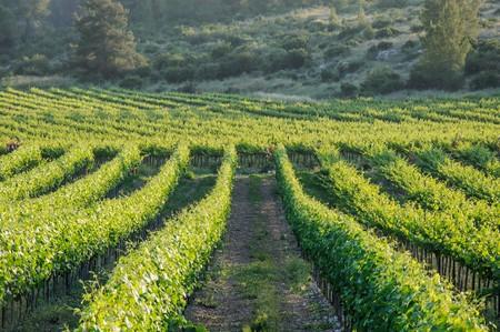 Vineyards in Israel   ©Irina Fuks/Shutterstock