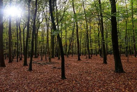 Sutton Park 2014-46 © Andrew Callow/Flickr