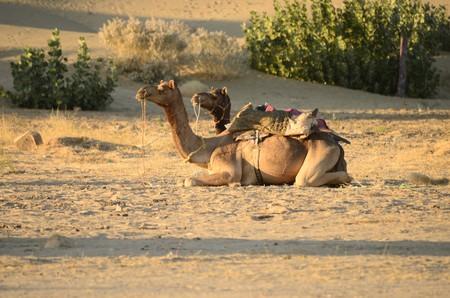 Camel rides in the desert| © Ana Raquel S. Hernandes/Flickr