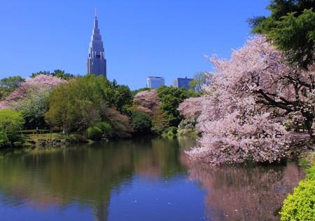 Shinjuku Gyoen National Garden – sakura | © Kakidai/WikiCommons