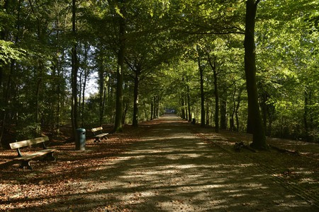 The main road of the Laerbeek woods, in the Koning Leopold Park   Stephane Mignon/Flickr