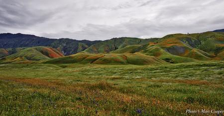 California Carpet   © Marc Cooper/Flickr