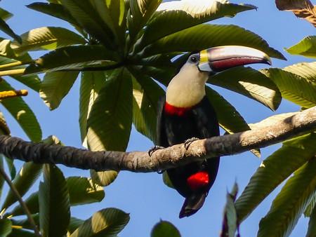 Iwokrama Rainforest, Guyana © MM / Wikicommons