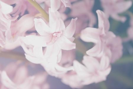 Flowers | © Aleksandar Radavonovic / Unsplash