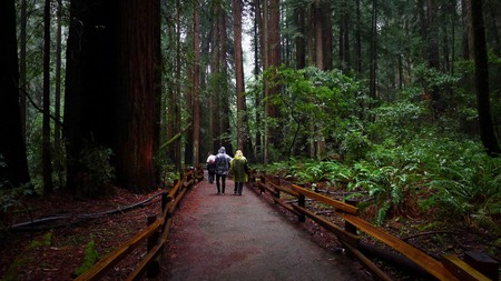 Muir Woods © Stephen Kennedy/Flickr