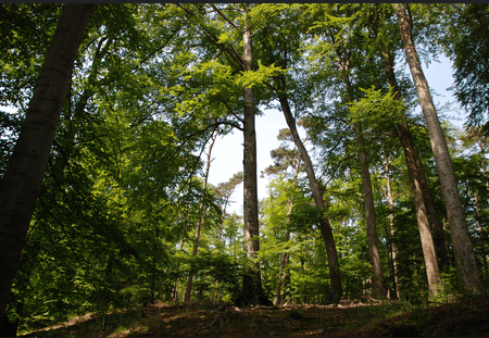 Forêt de hêtres (Soignes forest - Brussels) | Stephane Mignon/Flickr