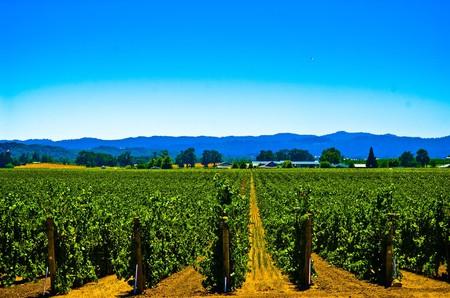 Vineyard, Sonoma | ©star5112/Flickr