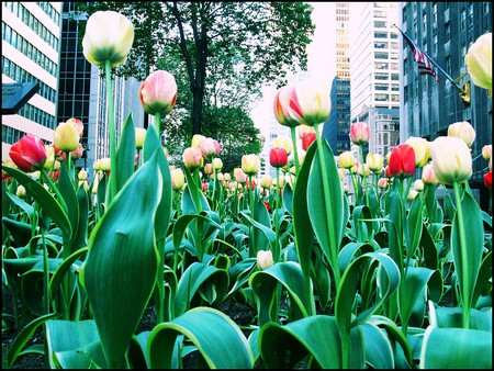 Spring on Park Ave.   © Taís Melillo/Flickr