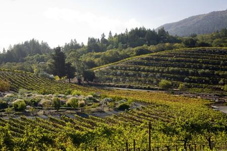 Photo courtesy of Benziger Family Winery