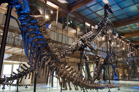 The Museum's famous Iguanodons  Courtesy of the Royal Belgian Institute of Natural Sciences