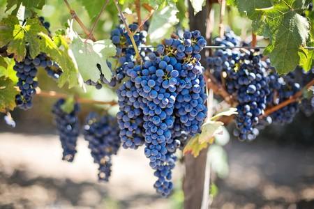 Purple Grapes | © Mark III/Pixabay