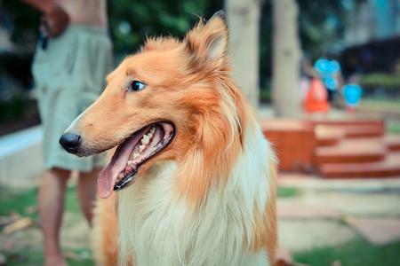 Dog | © Jeff Ro/Flickr