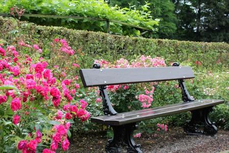 Coloma Park Rose Garden   Courtesy of Anne Boyle