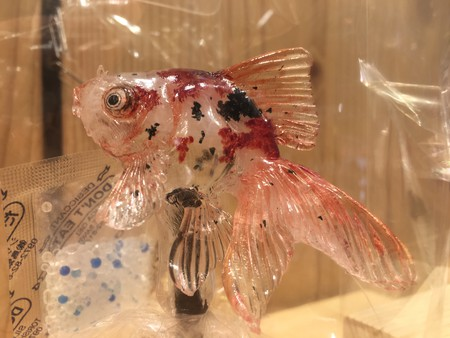 A mottled goldfish amezaiku sculpture from Ameshin | © Alicia Joy