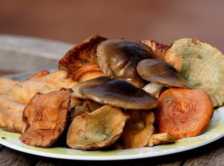 Mushroom picking: a Catalan autumn tradition   ©  Ferran Pestaña/Flickr