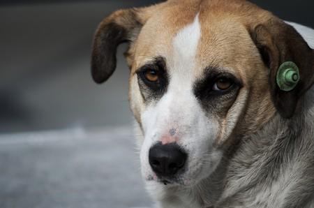 Dog | © Can Mustafa Özdemir/Flickr