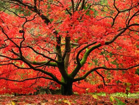 Benmore Gardens, Argyll And Bute | © kloniwotski/Flickr