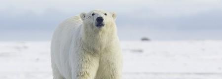 Polar Bear | © Anita Ritenour/Flickr
