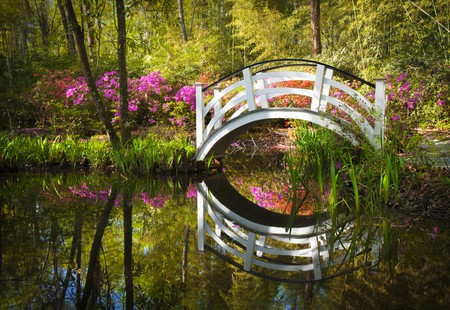 Pond in south Charleston   © Dave Allen Photography/Shutterstock