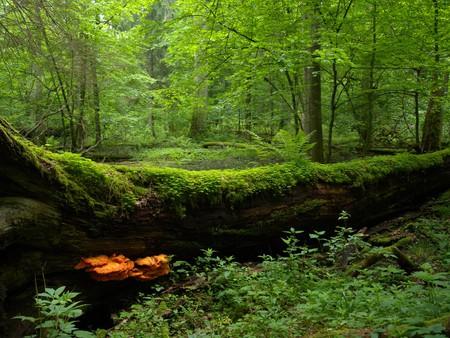 Białowieża National Park © Frank Vassen/ Flickr