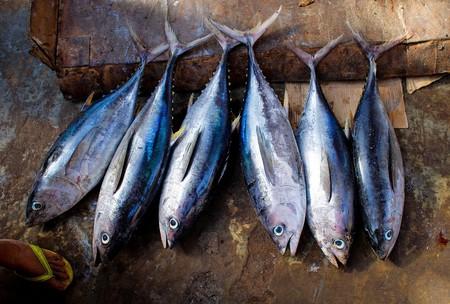 Fish   © Skeeze/Pixabay