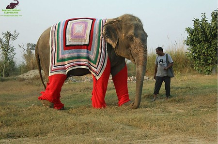 Bijli elephant enjoying an evening walk in her warm jumper © Wildlife SOS