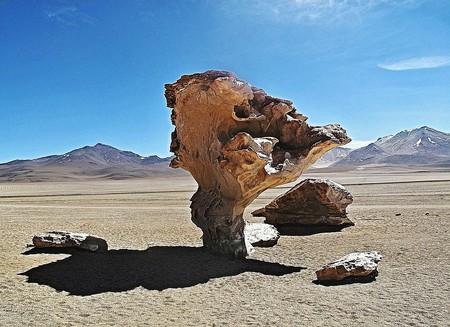 The stone tree | © capobleu2a/pixabay