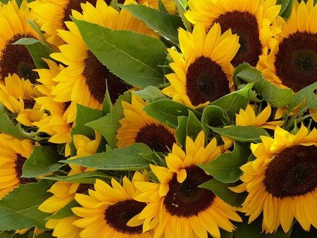 Nice's Marché aux Fleurs has been selling flowers for over a hundred years | © Falco/Pikabay
