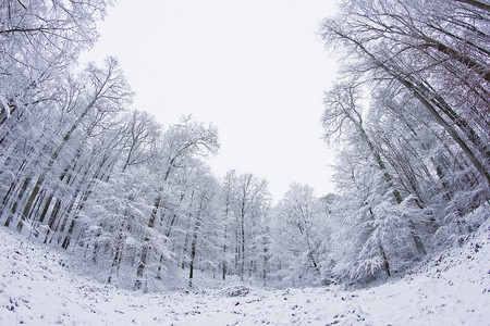 The Sonian Forest in wintertime   © Didier Weemaels / Flickr